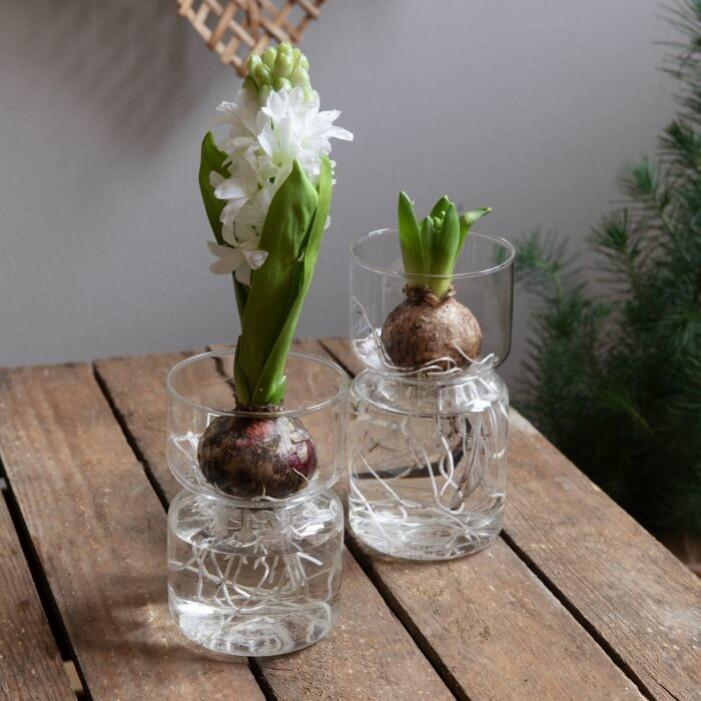 Vas hyacint