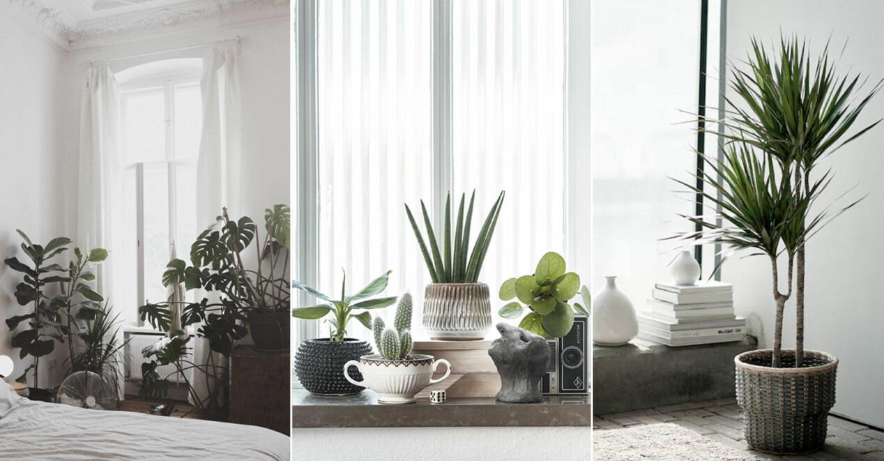 5 trendige Zimmerpflanzen im Herbst 2021