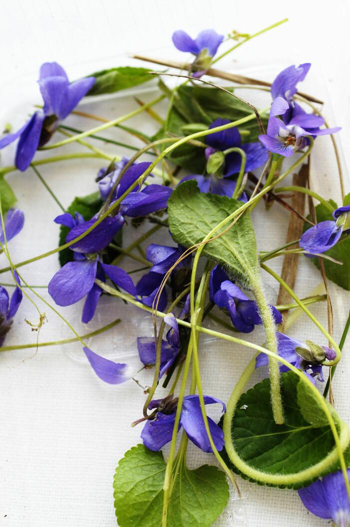 Tips på ätbara blommor exempelvis violer