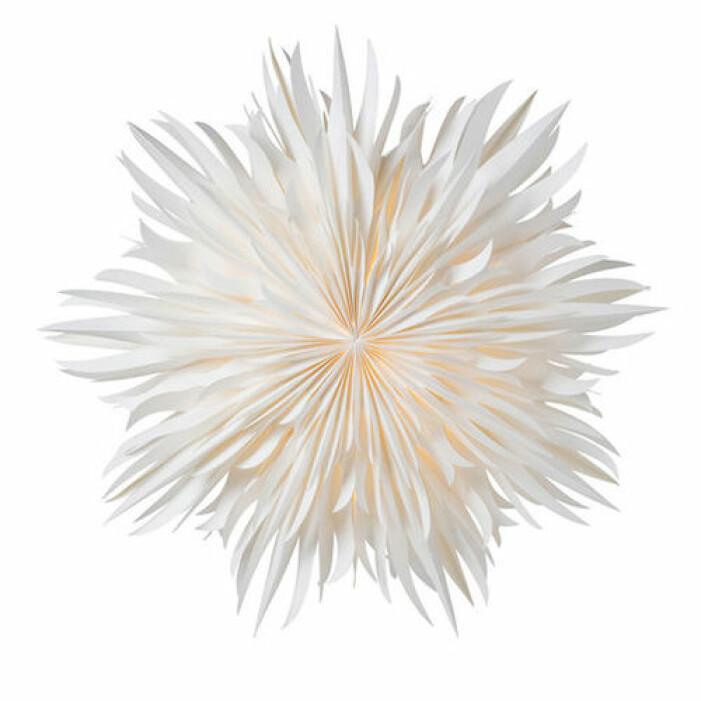 Vit pappersstjärna, Watt & Veke